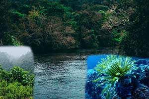 Ekosistem2