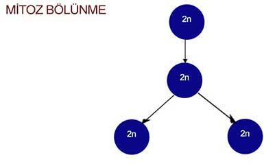 Mitoz Blounme IO8