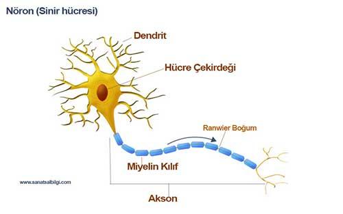Neuron_IO6A