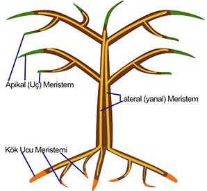 Tree2CYazi