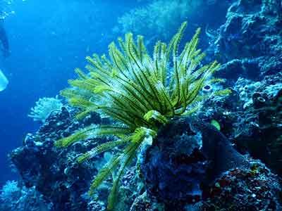 mercan_resifleri1